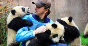 Новый подход к управлению может помочь избежать уязвимости или исчезновения видов