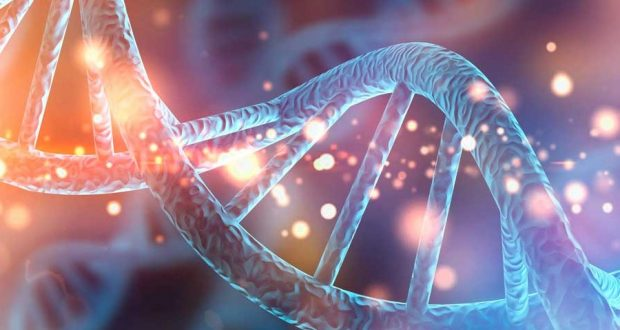 Исследователи определили «адрес», который объясняет, как белок PRC2 связывается с РНК, чтобы заставить гены замолчать