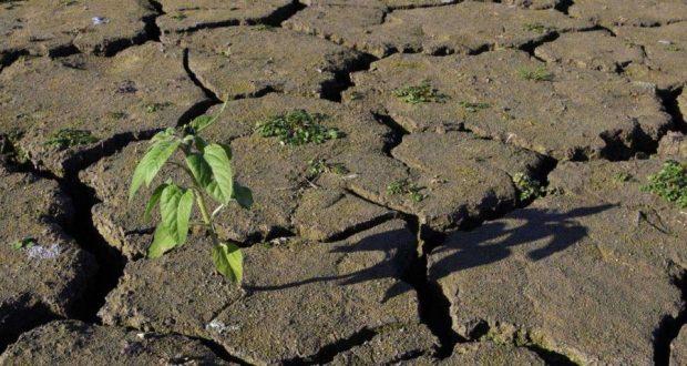 Практика нулевой обработки почвы на уязвимых участках значительно снижает эрозию почвы