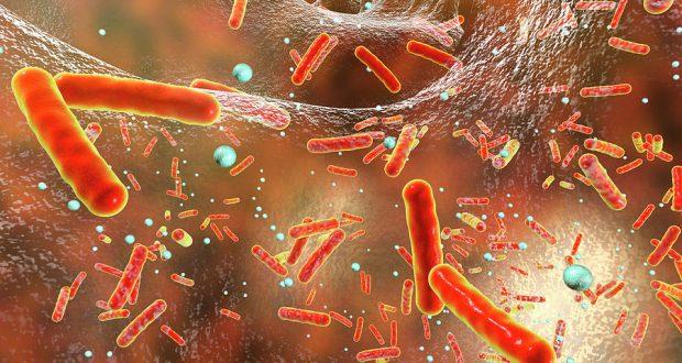 Токсин Шига предназначен для ослабления иммунной системы