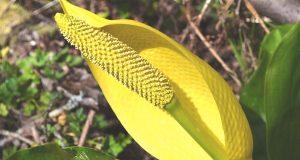 Как растения производят защитные токсины, не нанося себе вреда
