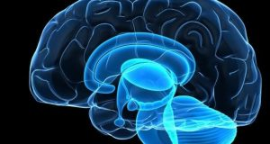Найдена новая роль ответственной за передвижение области мозга