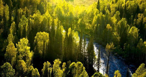 Исследование показывает острую потребность в высадке новых лесов